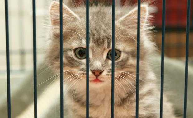 kitten_behind_bars_625x390