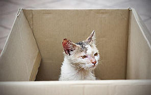cat needing home in box