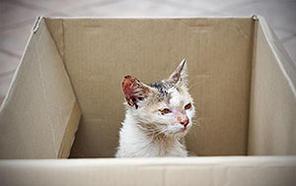 cat needing home in box